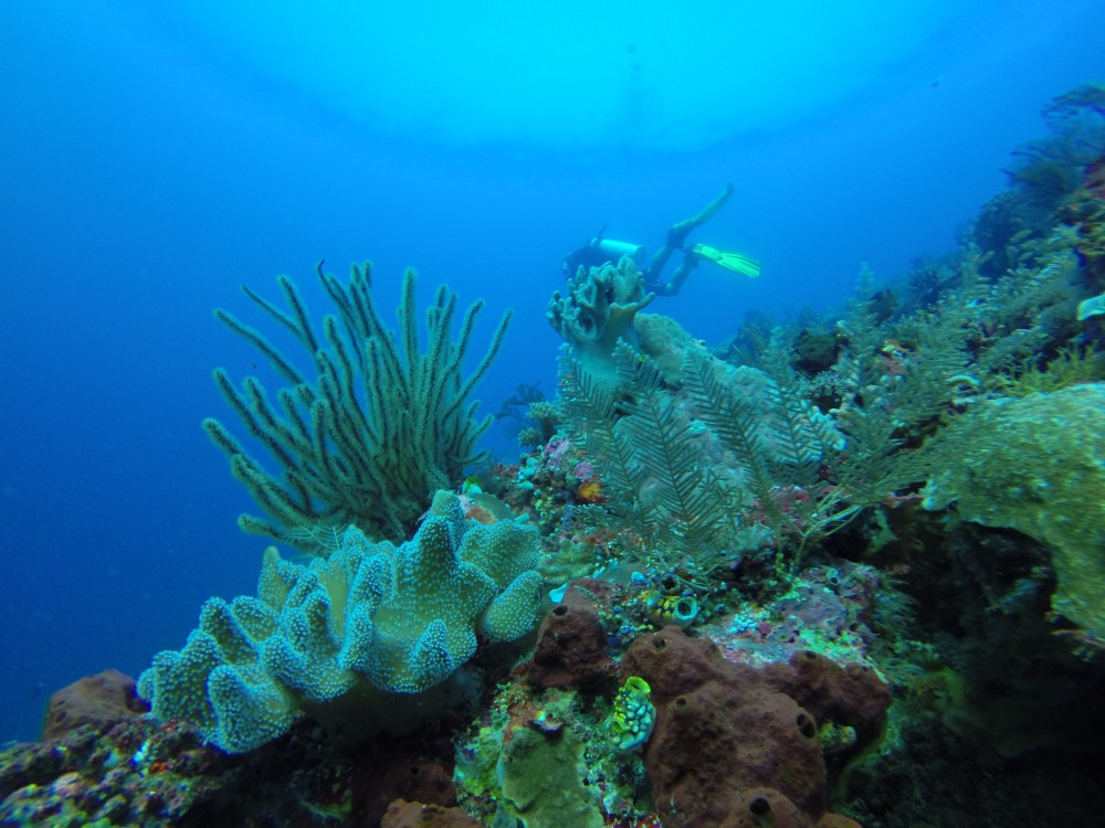 Once Upon A Time In Raja Ampat